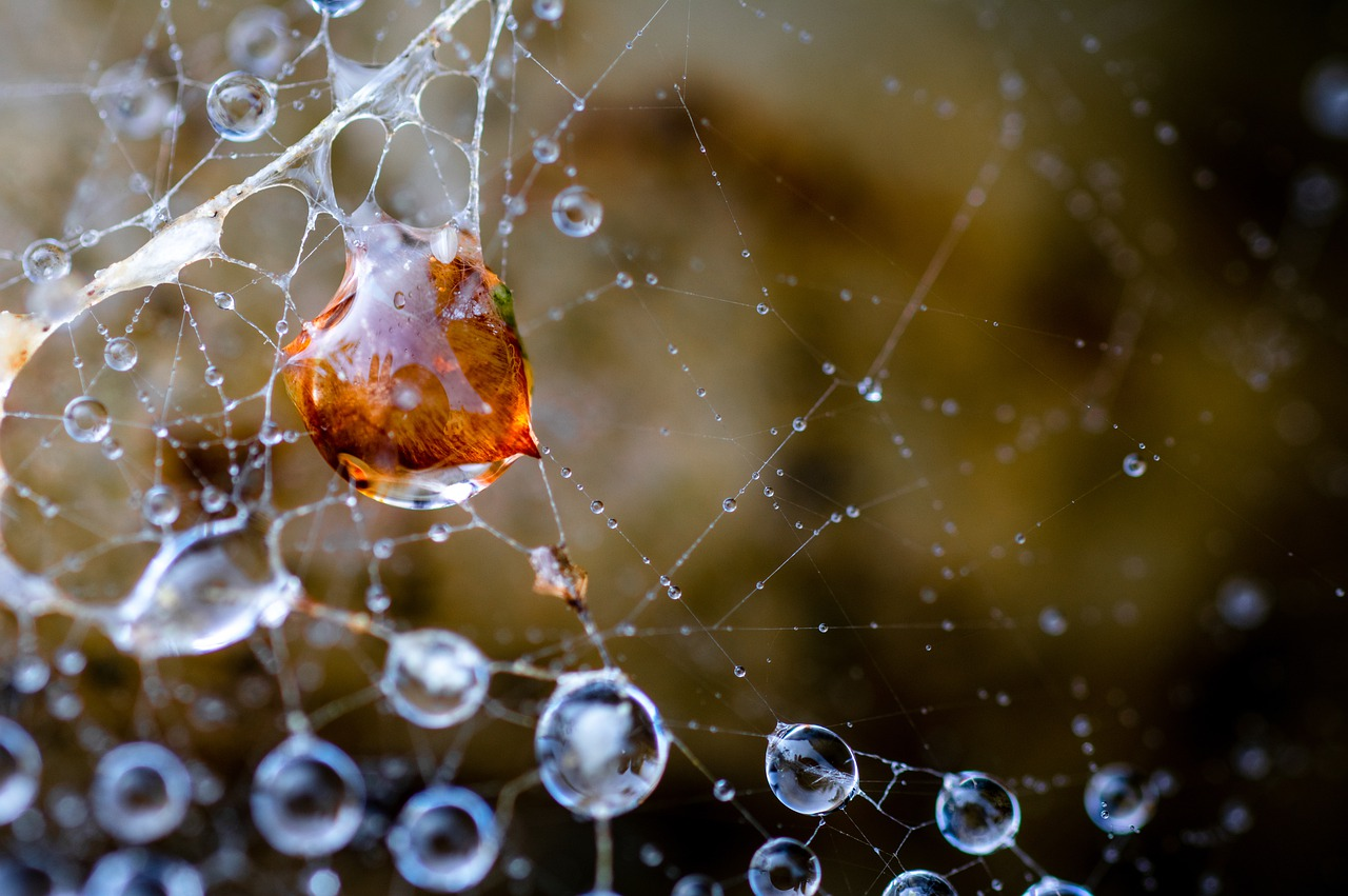 Web Cobweb Droplets Dewdrops Dew  - eluela31 / Pixabay